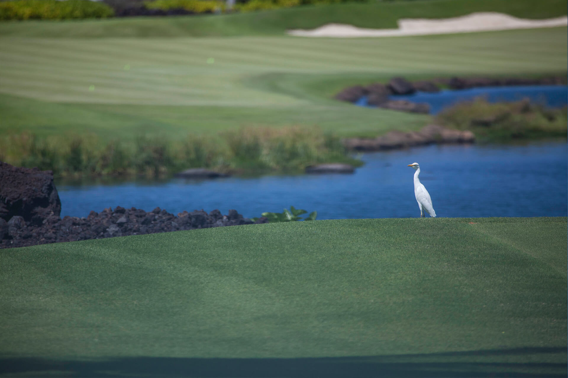 featured-option-golf-bird
